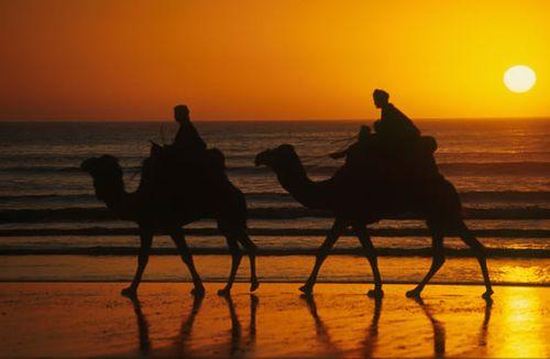 Agadir-dromadaires