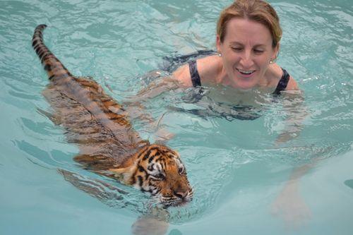 Tiger-swim
