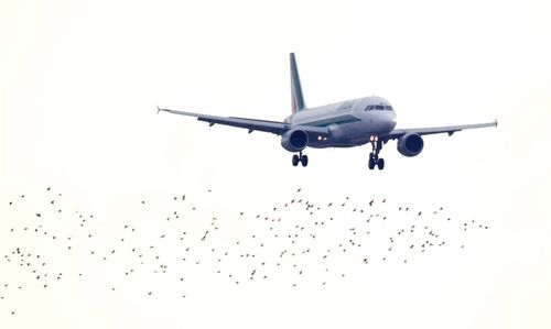 Airplane birds
